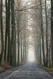 Old forest road in the winter royalty free stock photo