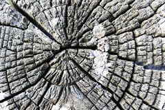 Old forest stump Royalty Free Stock Images