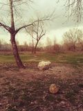 Old forgoten football ball in the woods. royalty free stock photo