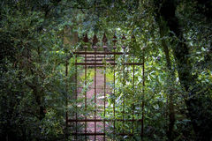 Old forgotten, iron gates. Overgrown with shrubs, in the old park Stock Images