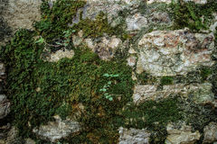 Old Fortress Detail with Plant, Texture Royalty Free Stock Photography