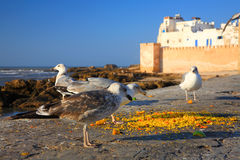 Old Fortress of Essaouira Royalty Free Stock Image