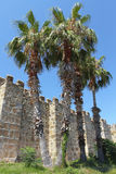 Old fortress and palms Royalty Free Stock Image