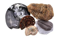 Old fossil collection Royalty Free Stock Photo