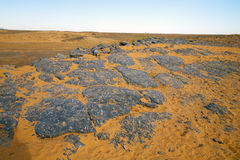old fossil in  the desert of morocco  rock  stone Stock Image