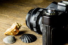 Old fotocamera with sea shells on the brown wooden table Stock Images
