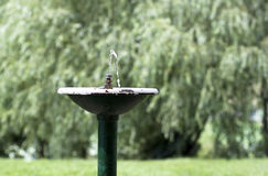 Old fountain - RAW format Stock Photography