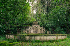 Old fountain in the jungle covered with plants Stock Photos