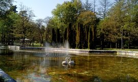 Old fountain with swans Stock Image