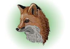 Old fox. Head and neck of the old fox vector illustration