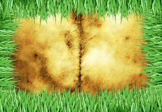 Old foxed piece of paper with green grass blade  Stock Image