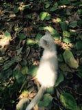 White little cat. A little cat in the garden Stock Image
