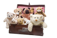 Old friends - nostalgic plush teddy bears isolated on white. Luggage full of plush teddy bears isolated on a white background Royalty Free Stock Photo