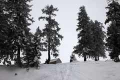 Old frosty wooden hut and snow-covered forest in winter snow mou. Ntains with gray fog sky. Ukraine, Carpathian Mountains. Remote location Royalty Free Stock Photos