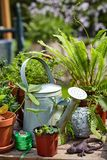 Old galvanised watering can with potted plants. Balls of twine and a lizard ornament on a wooden outdoor garden table royalty free stock photos
