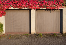 Old garage with red ivy Stock Photo