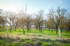 Old garden with fruit trees Stock Photography