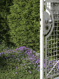 Old Garden Gate in Spring Stock Photo