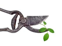 Old garden pruner and green leaf. Isolated on a white background Royalty Free Stock Photos