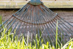Old garden rakes with traces of rust are standing on the green grass near the wall of the house. Old metal triangular garden rake for cleaning grass and garbage royalty free stock images
