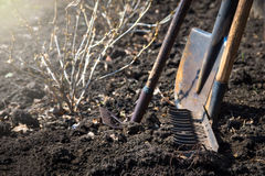 Old garden tools. Old retro garden tools (cultivator, shovel, rake) over brown soil (ploughed land) close up.  Agriculture, gardening, soil cultivation, village Stock Photography