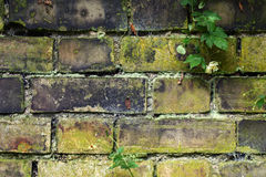 Old garden wall Royalty Free Stock Images
