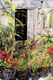 Old garden and wooden barred window Royalty Free Stock Photo
