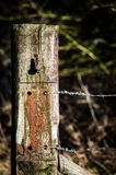 Old gate post with barbed wire Stock Photos