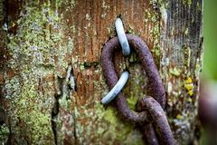 Old gate post with chain and barbed wire Royalty Free Stock Photos
