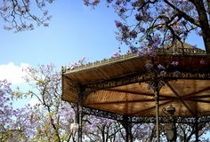 Old gazebo surrounded by flowering jacarandas Stock Images