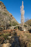 Old Genoese bridge in the Tartagine valley in Corsica. An ancient stone Genoese bridge crossing a stream in the mountains of the Tartagine valley near Mausoleo stock photos