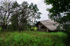 Old gloomy abandoned wooden house in the forest stock photo