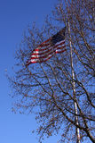 Old Glory Flying behind tree. US Flag flying behind Tree Royalty Free Stock Photo