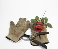 Old gloves, clippers and a red rose on a white background. A pair of old dirty gloves, a pruning tool and a red rose on white Royalty Free Stock Photography