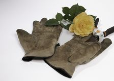 Old gloves, clippers and a yellow rose on a white background Stock Photos