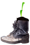 Old good boots with plant Royalty Free Stock Photography