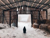 Old granary in the village royalty free stock images