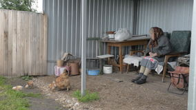 Old grandmother looks after the chicken and chickens stock video footage