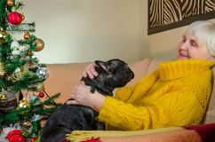 Old grandmother in new year hug, play with active black French bulldog. senior lady enjoy cheerful, young pet. granny in stock image