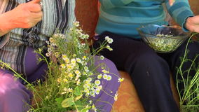 Old grandmother and young girl pick camomile flower blooms stock video