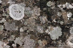 Old granite with lichens Royalty Free Stock Photography