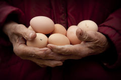 Old granny hands holding fresh eggs Royalty Free Stock Photos