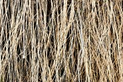 Old grass. dry grass cover background texture. Close-up royalty free stock image