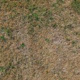 Old Grass texture Stock Image
