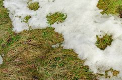 Old grass under the snow. stock photo