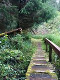 Old grassy bridge in forest Royalty Free Stock Photography
