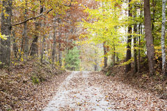 Old gravel road at Fall Stock Photography