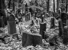 Old gravestones in the New Jewish Cemetery in Miodowa Street, Kazimierz, Krakow, Poland. Gravestones amidst the undergrowth in the New Jewish Cemetery in royalty free stock photography