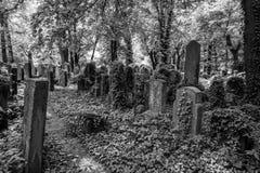 Old gravestones in the New Jewish Cemetery in Miodowa Street, Kazimierz, Krakow, Poland. Gravestones amidst the undergrowth in the New Jewish Cemetery in royalty free stock photo