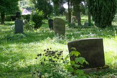 Old gravestones in a woodland cemetery stock image